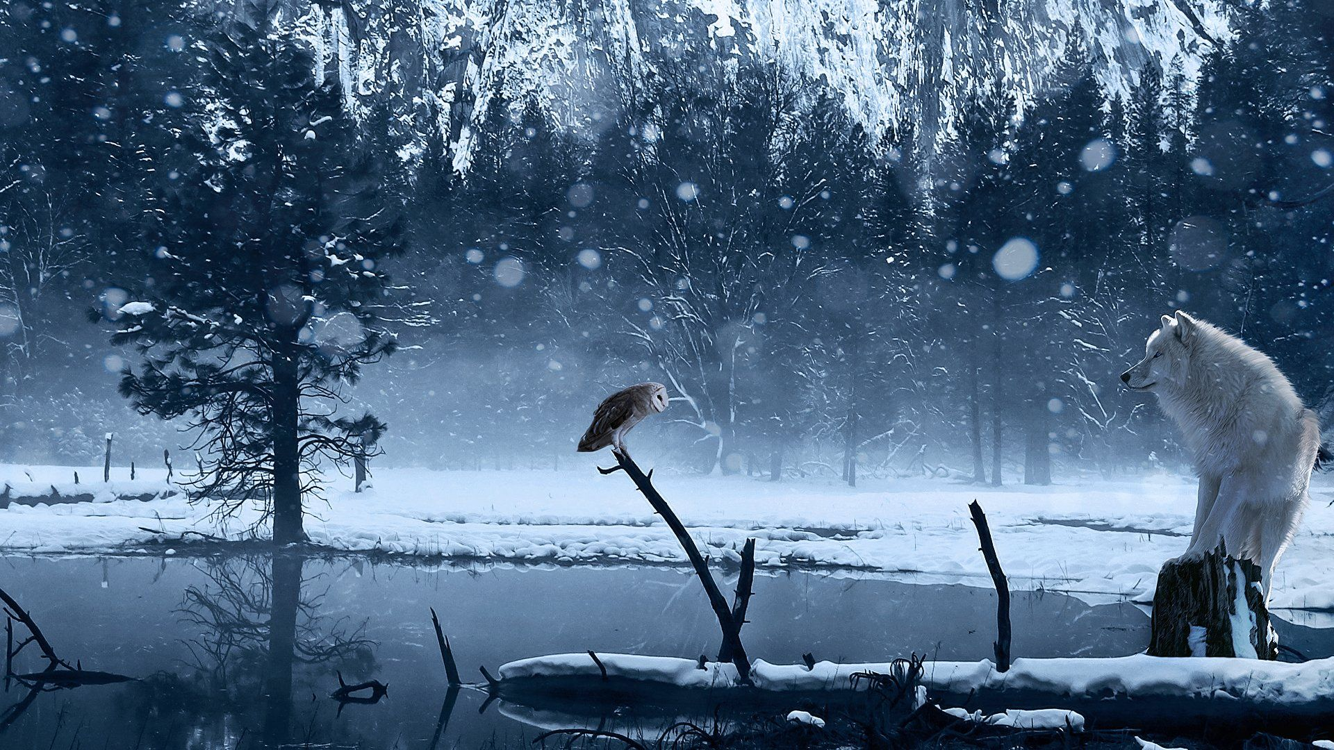 Wolf And Owl Wallpaper Owl Wallpaper Wolf Wallpaper Wolf Background