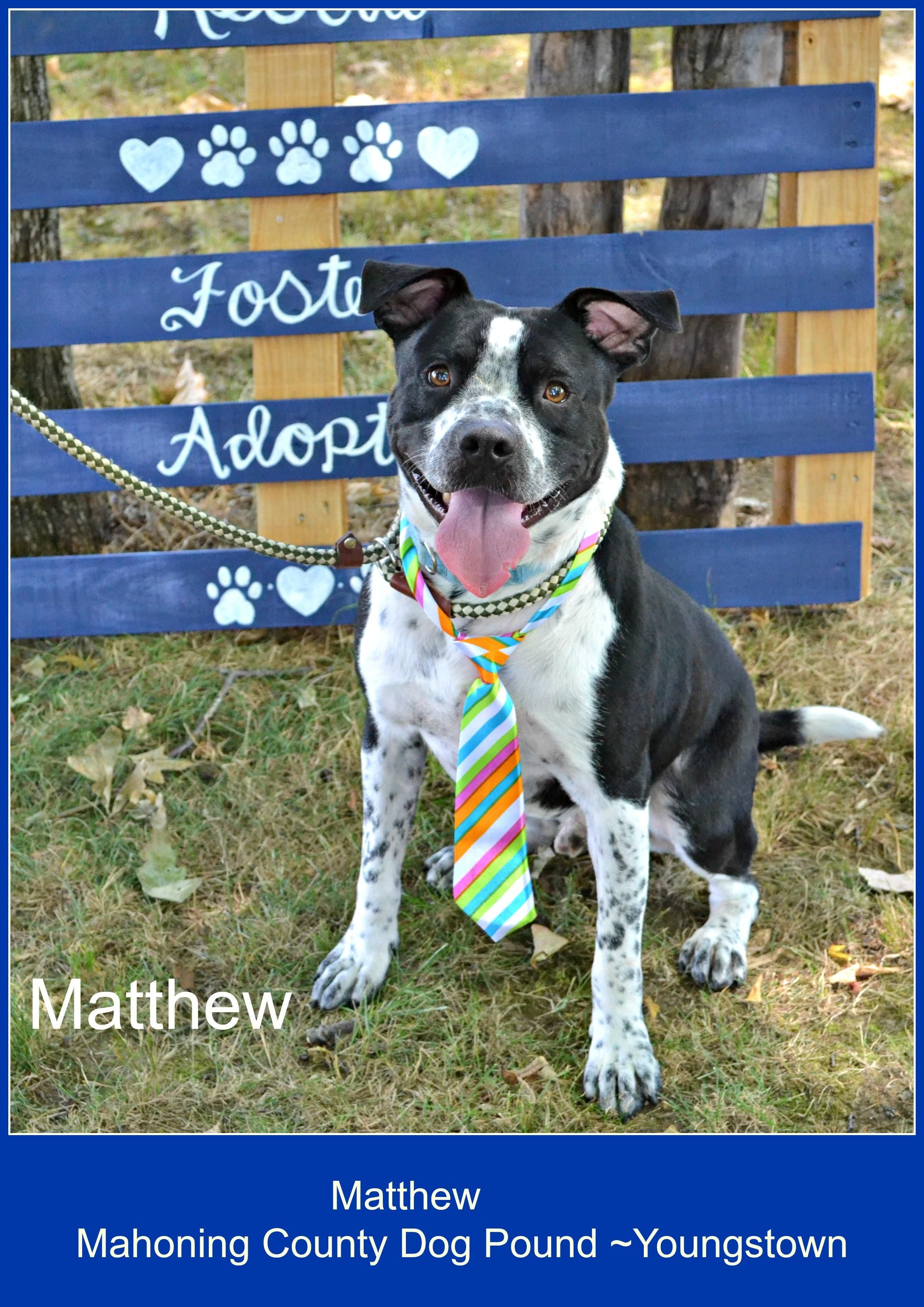 Matthew is an adoptable Terrier searching for a forever family near Youngstown, OH. Use Petfinder to find adoptable pets in your area.