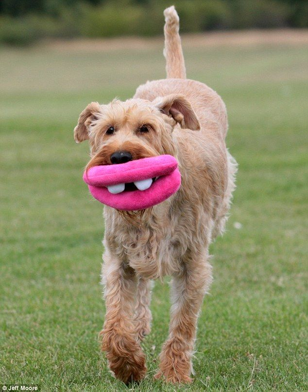 Goofy Toy That Brings A Smile To Dog S Lips Funny Dog Toys Pet