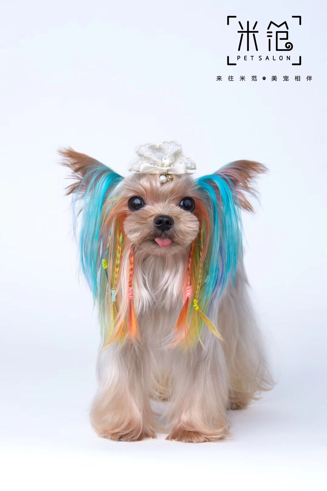 Creative Grooming Work By Mifan Pet Salon With Opawz Permanent Dog