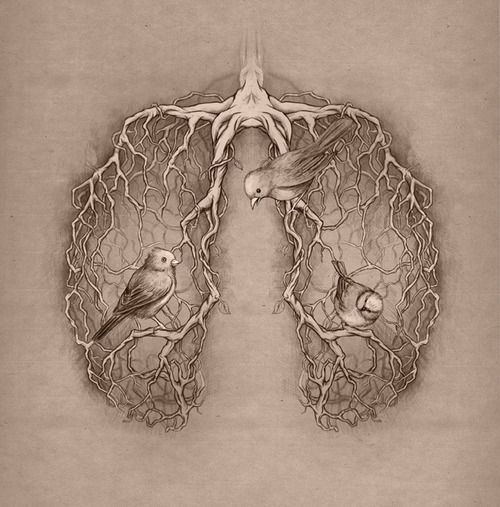 Pulmones Pajaros Raices Art Inspiration Pinterest Lungs And