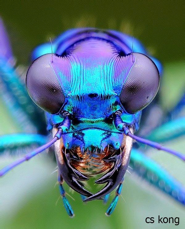 I Like Bugs おしゃれまとめの人気アイデア Pinterest Nuevas Aguas 虫 アートのアイデア 動物