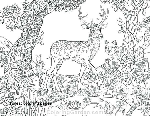 Christmas Santas Reindeer Coloring Pages Best Image Collection