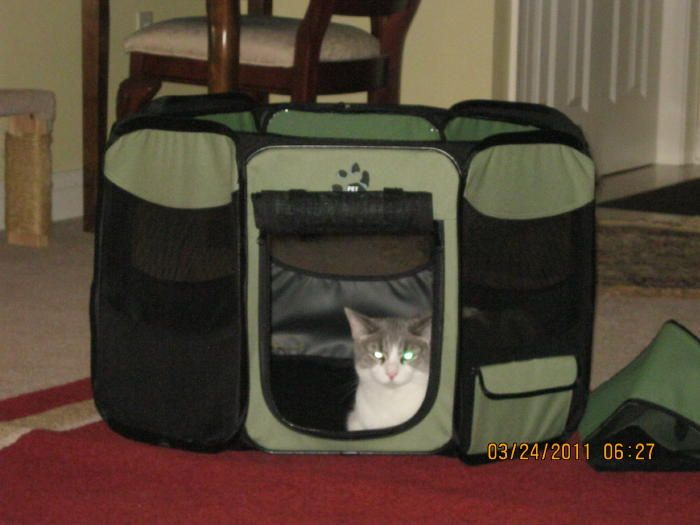 Octagon Cat Pen Review A Great Way To Travel And Move Across The Country With Cats Cat Pen Cat Travel Carrier Cat Travel