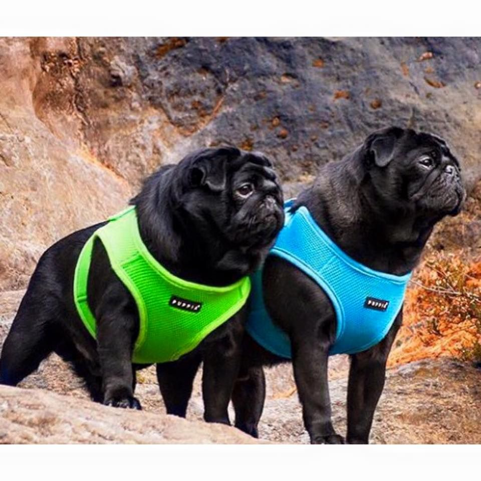 Wilkes Dog Harness Coat Puppia Dog Coats Dog Harness Dog