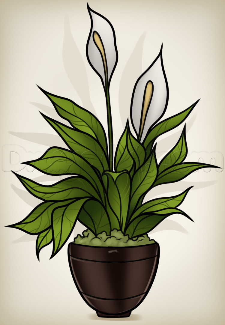 How to draw a peace plant peace lily bunny schwartz pinterest how to draw a peace plant peace lily dhlflorist Image collections