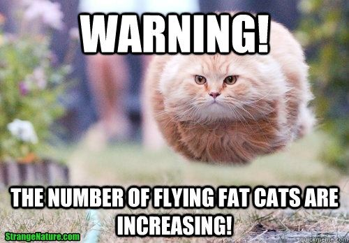 Funny Cat Meme Generator : Warning! the number of flying fat cats are increasing! fat cat