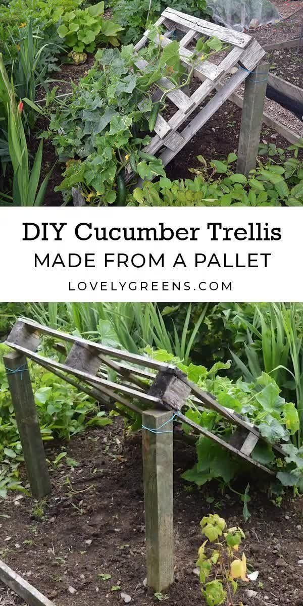 DIY Pallet Cucumber Trellis