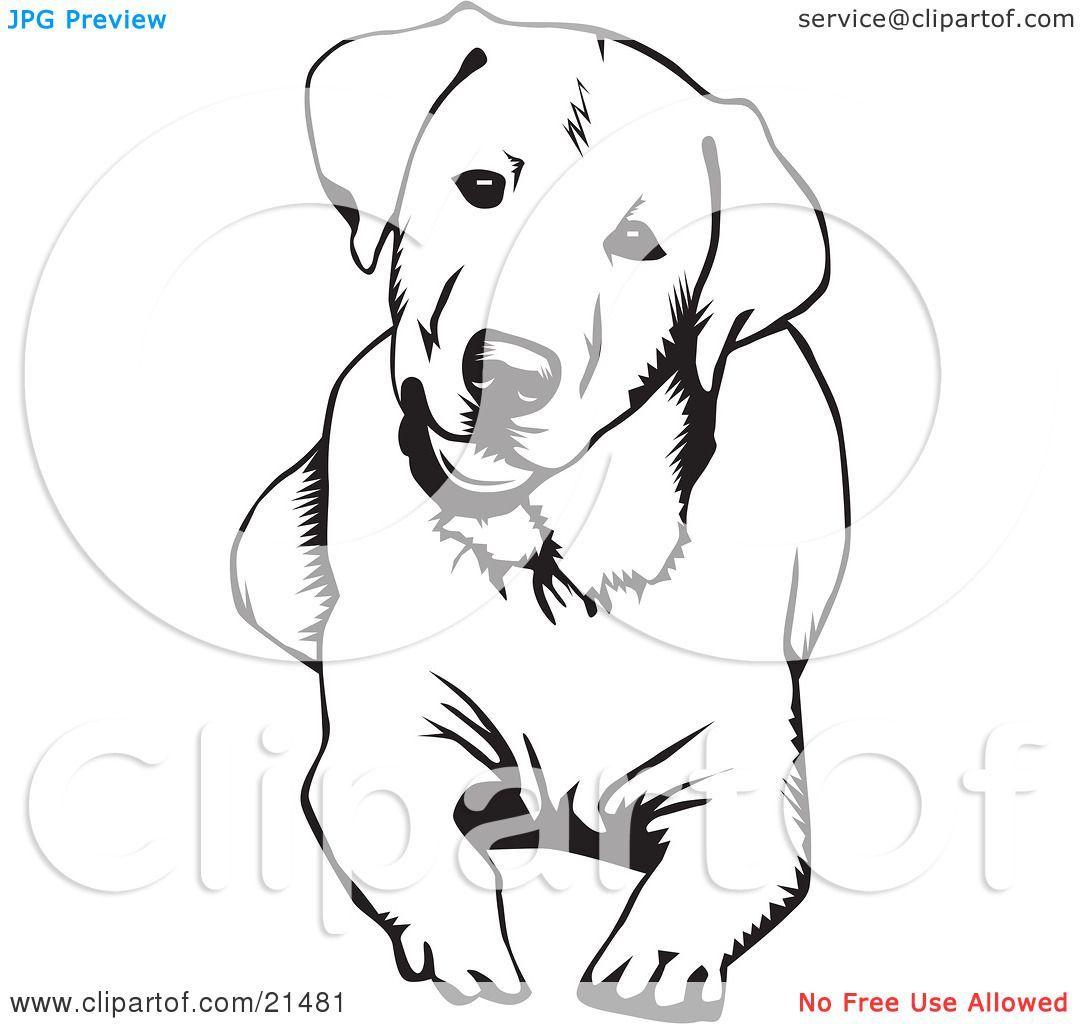 7 Spectacular Breed Focus Labrador Retriever Ideas Labrador Retriever Dog Dog Drawing Lab Dogs