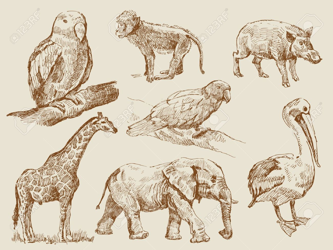 Stock Photo Wilde Tiere Tiere Und Tattoo Elefanten