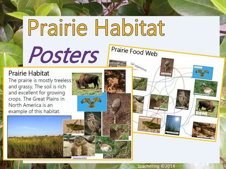 prairie themed posters to spark classroom discussion about the prairie habitat and food webs great food web reference for students teachering