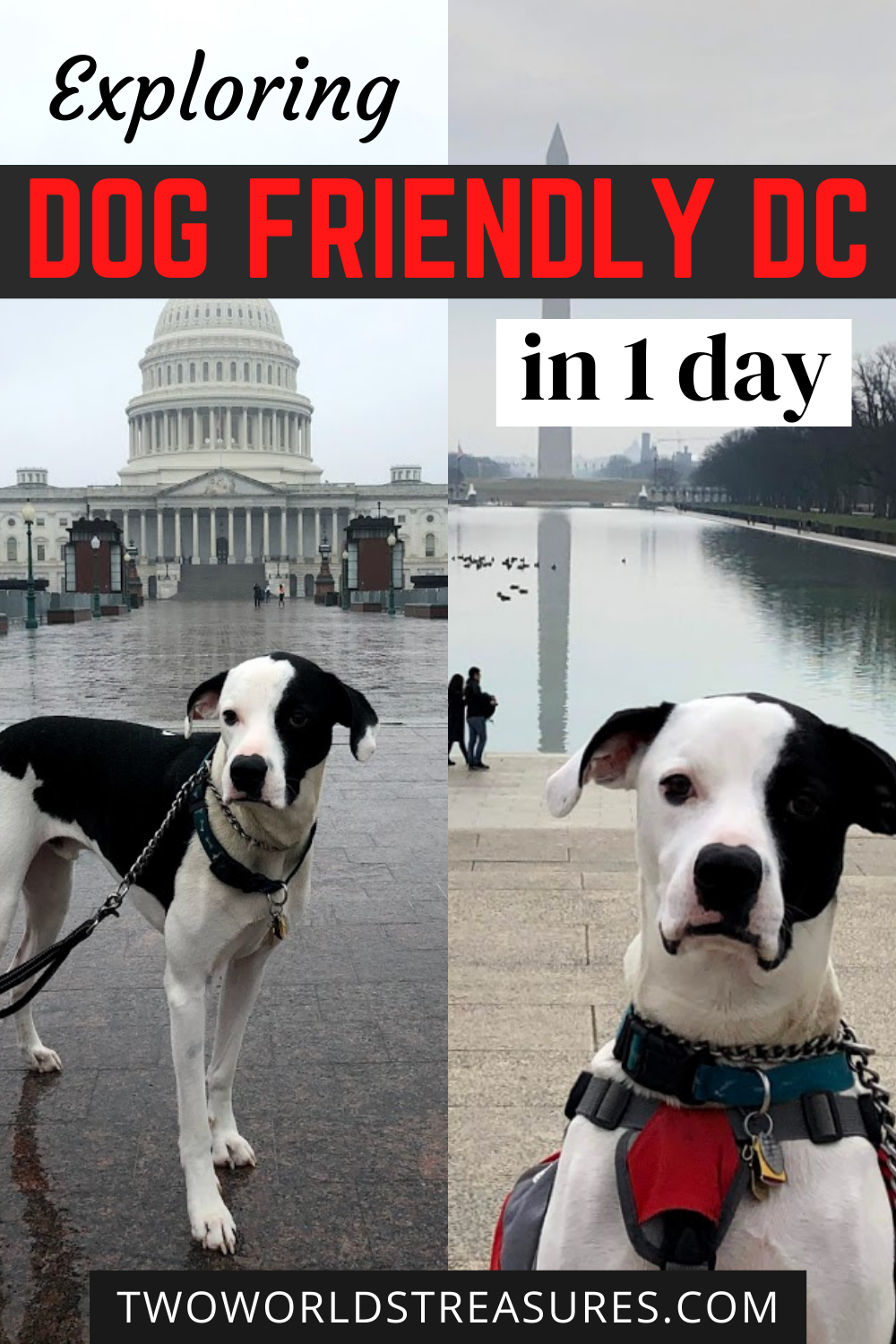 One Day Exploring Dog Friendly Dc Around The National Mall Two Worlds Treasures Dog Friendly Vacation Dog Friends Travel Usa