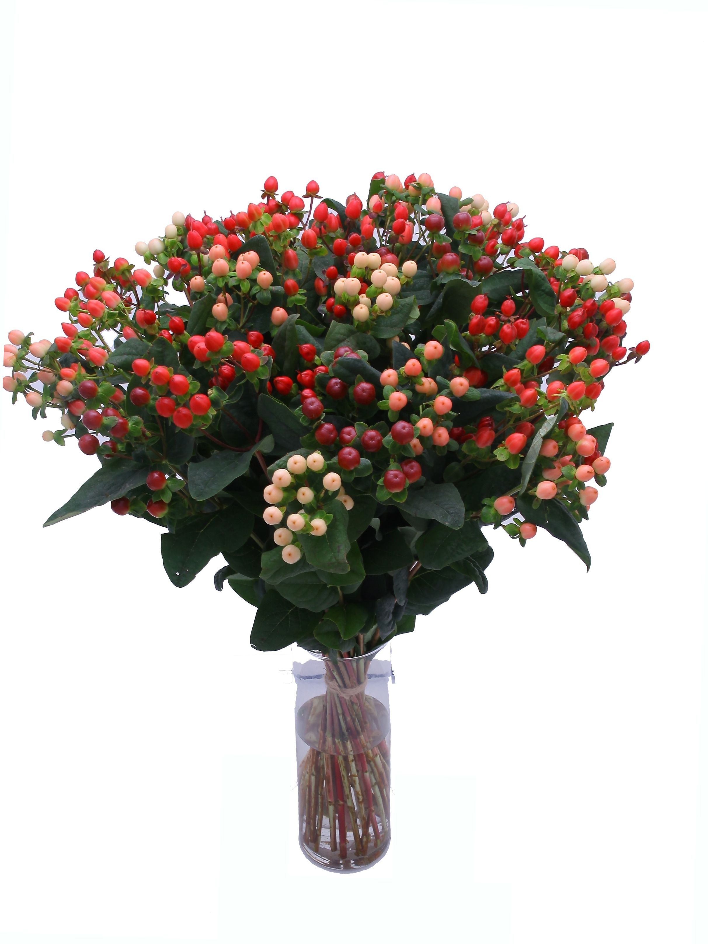 If you want bright berries for Christmas for a traditional look, then hypericum is a fantastic solution. These are Sovereign Hypericum Coco berries, in mixed colours from red and pink to cream and peach.