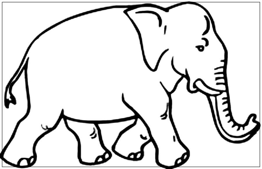 Colorear Elefante Online Cientos De Imagenes De Elefantes