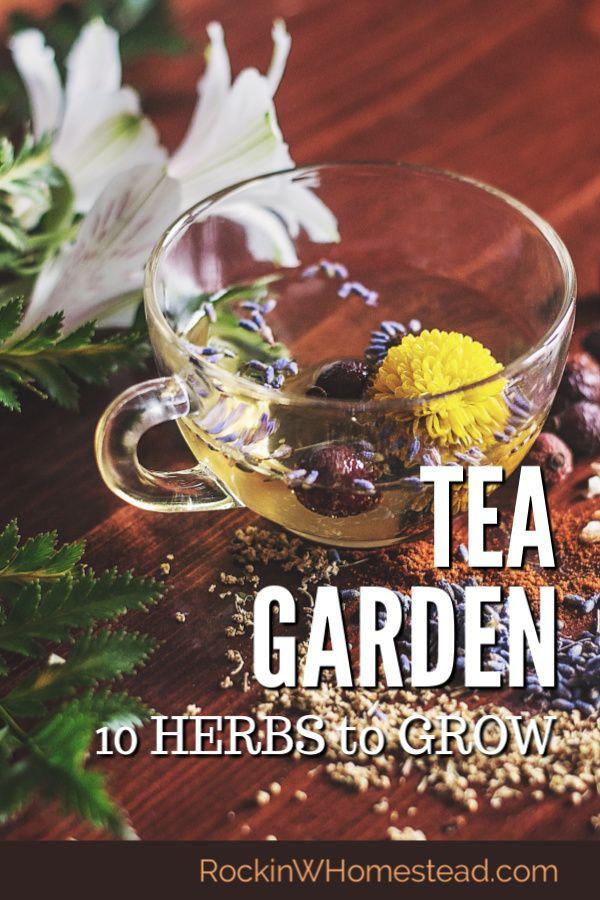 10 Herbs to Grow for a Tea Garden #herbsgarden