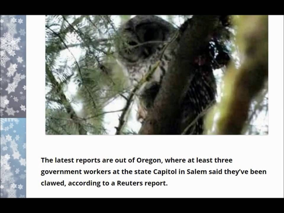 ALERT NEWS Demon attacking owl returns, goes after government workers