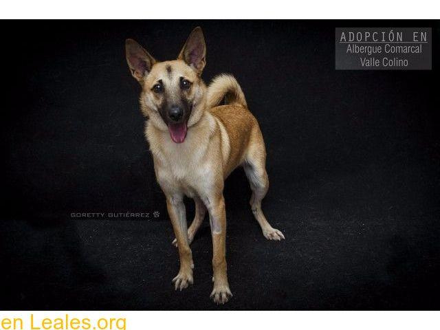 Perros Para Adoptar Santa Cruz De Tenerife Tenerife Ramoncín Para Adoptar Valle Colino Ramoncín Para Adoptar En El Alberg Adoptar Un Perro Perros Animales