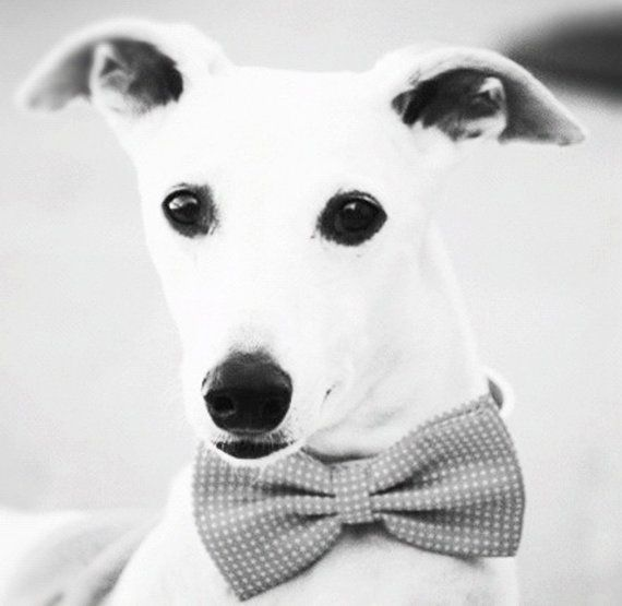 Simple Collar Bow Adorable Dog - 21b85442d3f7e4834e528f780bb127e4  Graphic_308557  .jpg