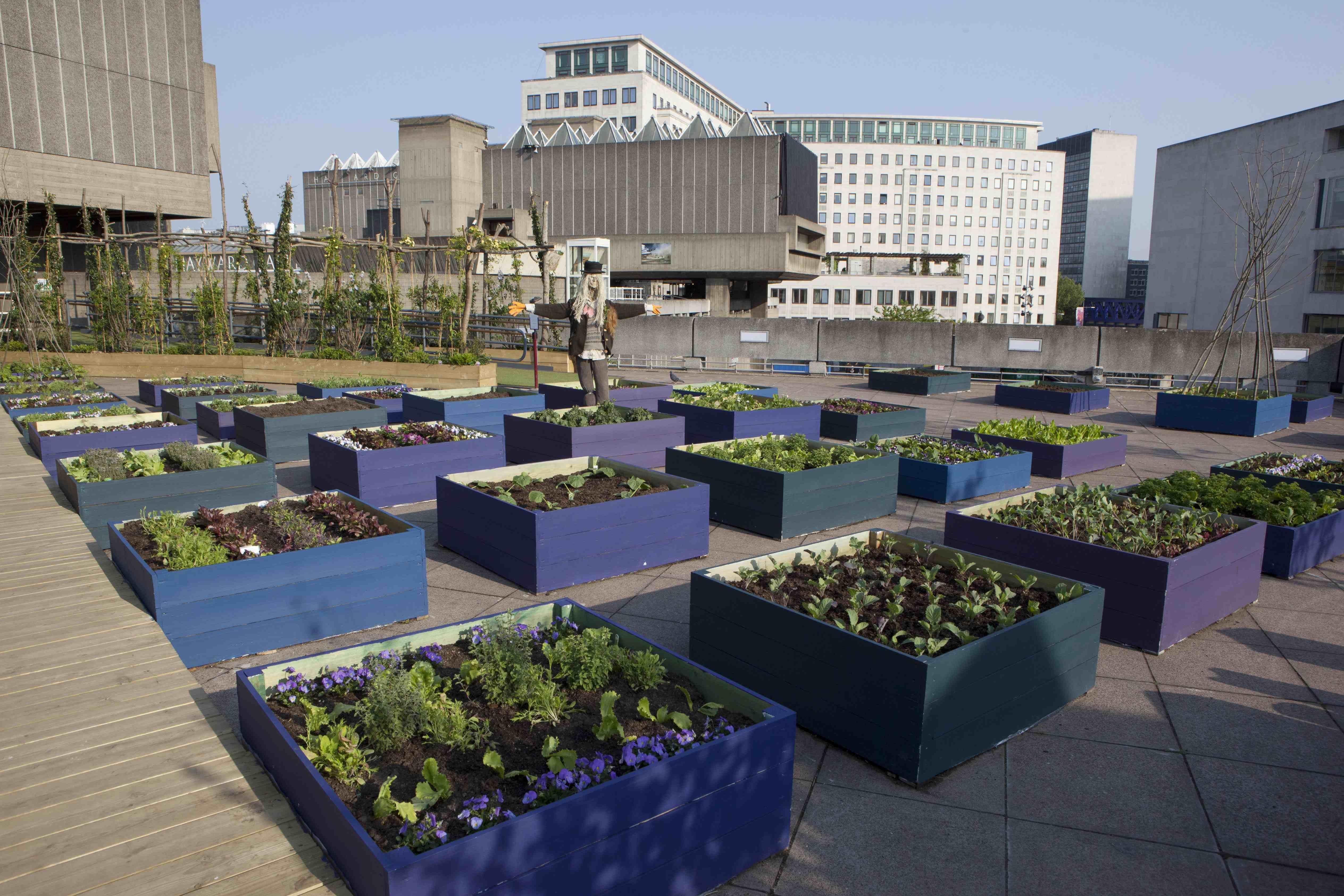 A Blue Wooden Raised Garden Bed Beautified With Various Green - Rooftop vegetable garden ideas