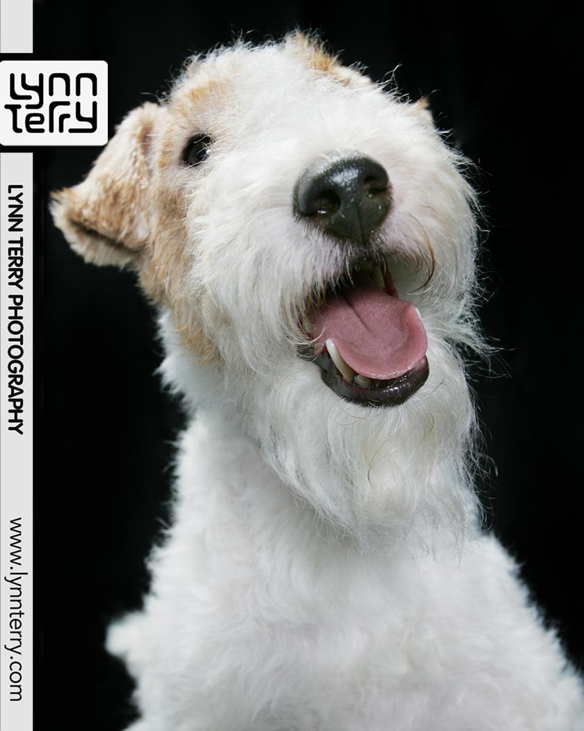 #lynnterryphotography #animalphotography #pictureworth1000words #photographydaily #justgoshoot #exploretocreate #visualsoflife #flashesofdelight #love #beautiful #photooftheday #pretty #beauty #talesofwaggingtails #petlover #petsmiles #petsdaily #petsoftheday #pets #petscorner #rescuedog #weeklyfluff #pawstruck #awwfeed #aww #bestwoof #pawpack #dogscorner #dog #dogs #photooftheday #dogoftheday #dogsonadventures