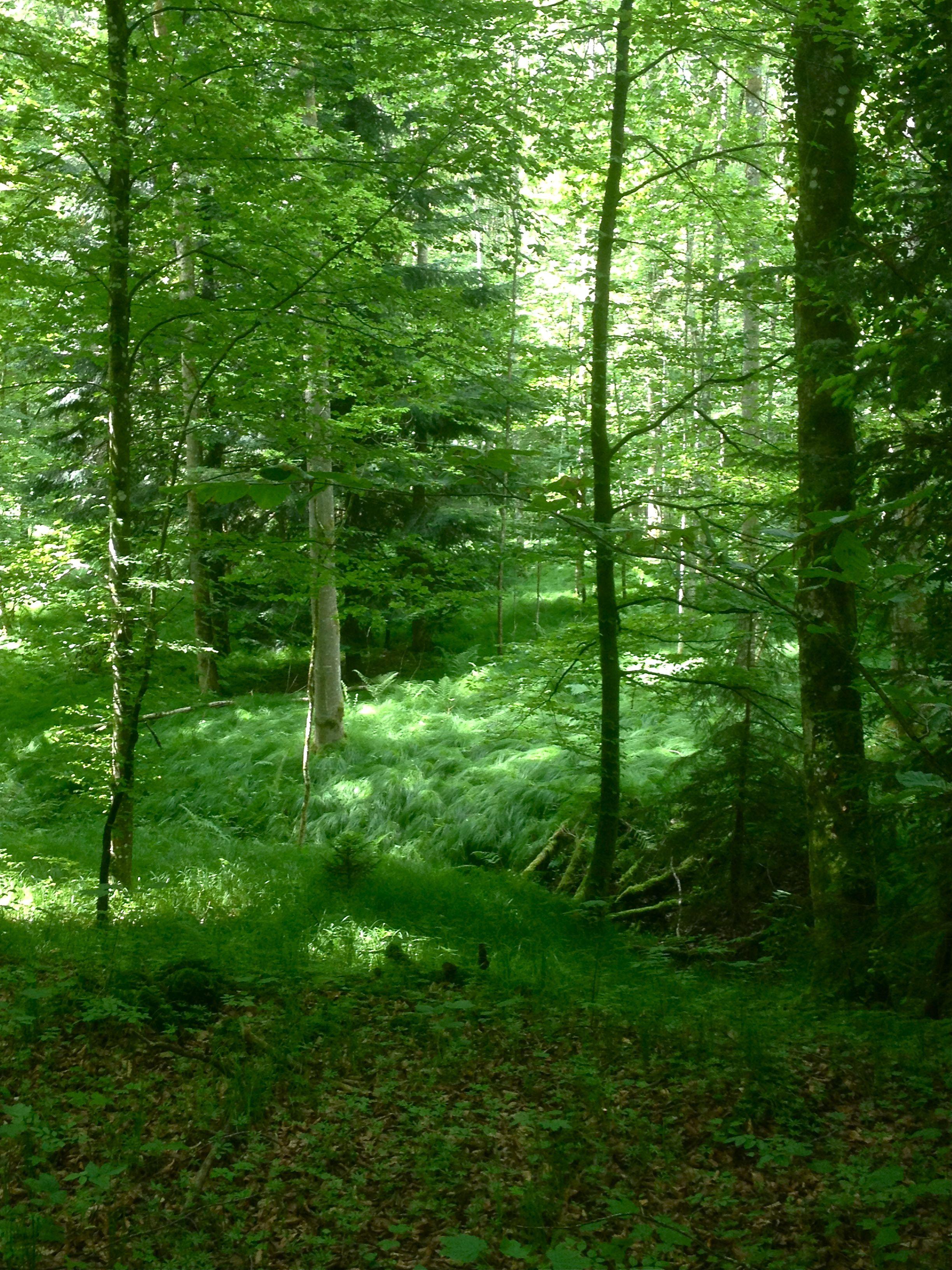 """É em nós que há os lagos todos e as florestas. (Fernando Pessoa, """"Não, não é nesse lago entre rochedos"""")"""