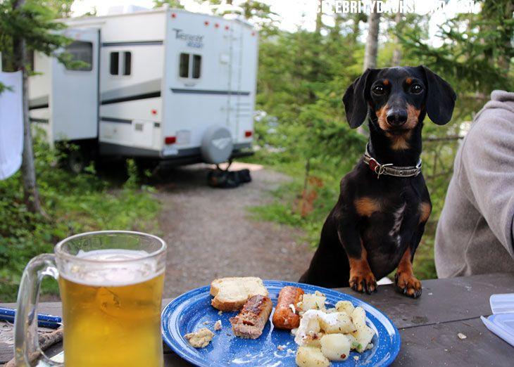 Chasing Waterfalls Camping Part 3 Crusoe The Celebrity Dachshund Dachshund Weenie Dogs