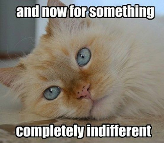 and now for something completely indifferent | Crazy cats, Cats, Bad cats