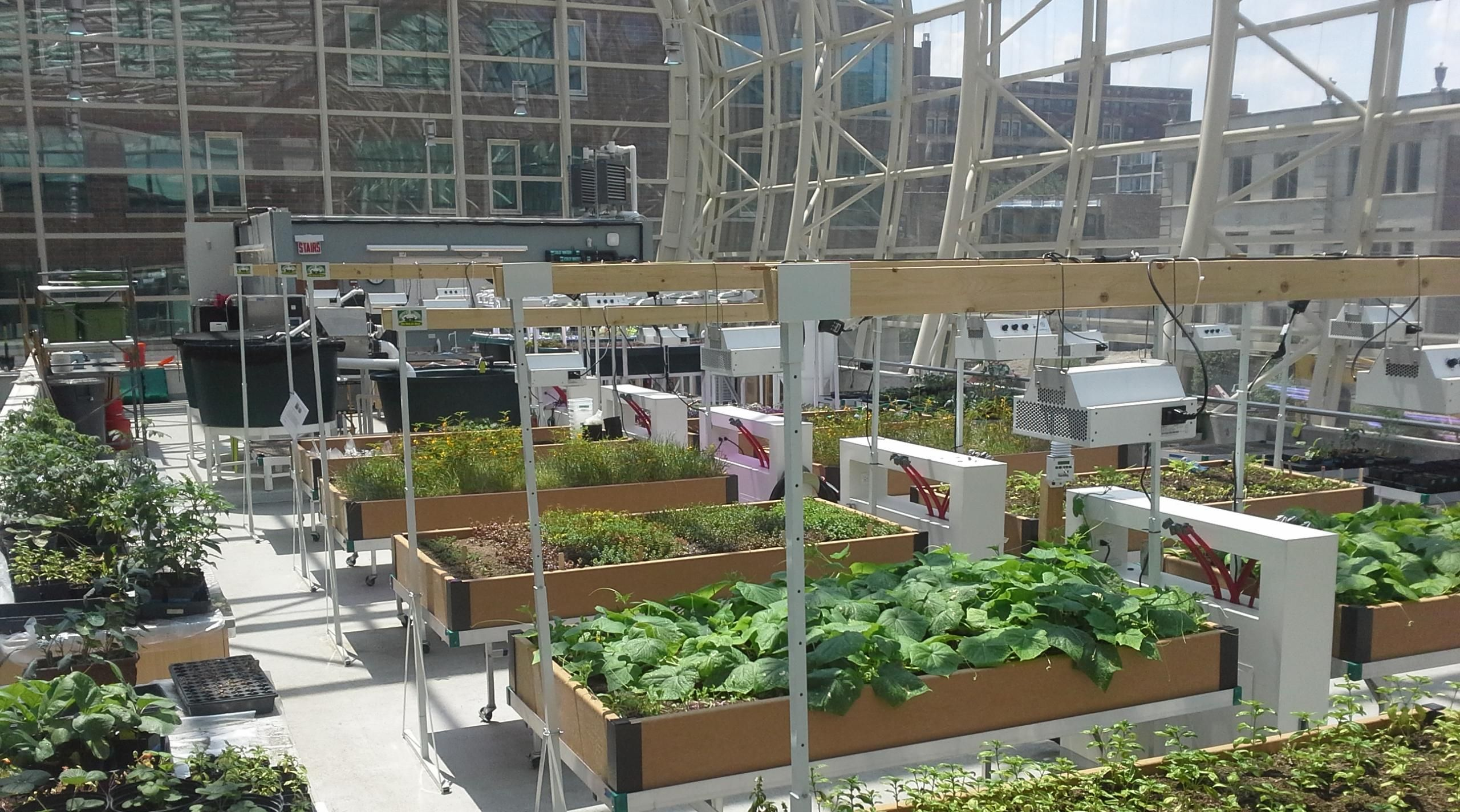 rooftop hydroponic greenhouse - Google Search | Gardening ...
