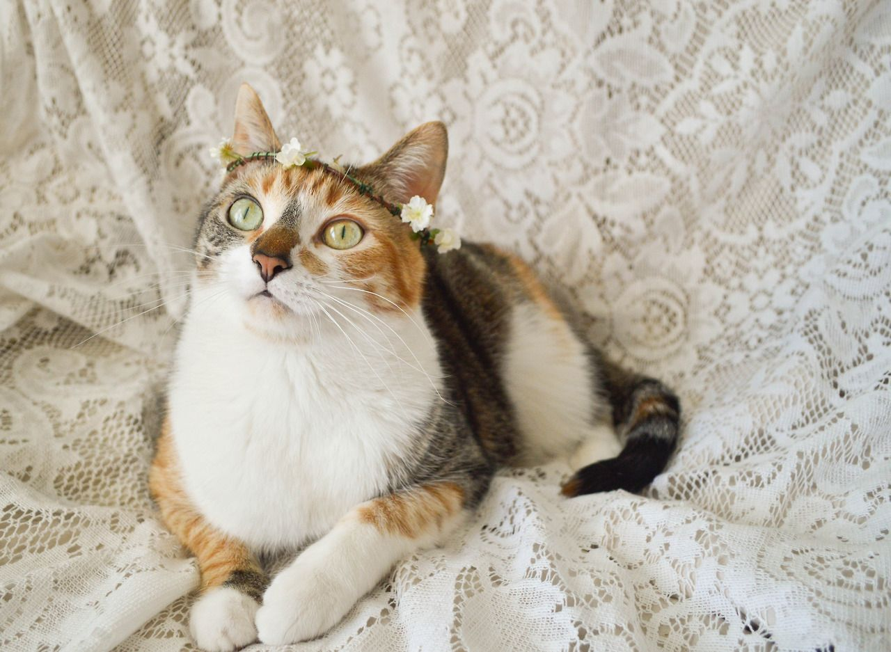 Fuckyeahfelines Floral Sabbatical I Made Purrl A Flower Crown Animal Planet Pretty Cats I Love Cats