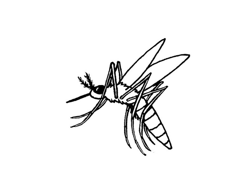 Free Printable Mosquito Coloring Pages For Kids Animal Coloring Pages Snake Coloring Pages Bunny Coloring Pages