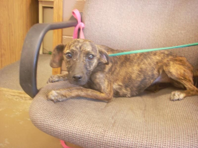 Adopt 1 available baby girl 9 mths on dog pounds