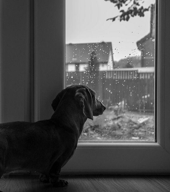 watching outside