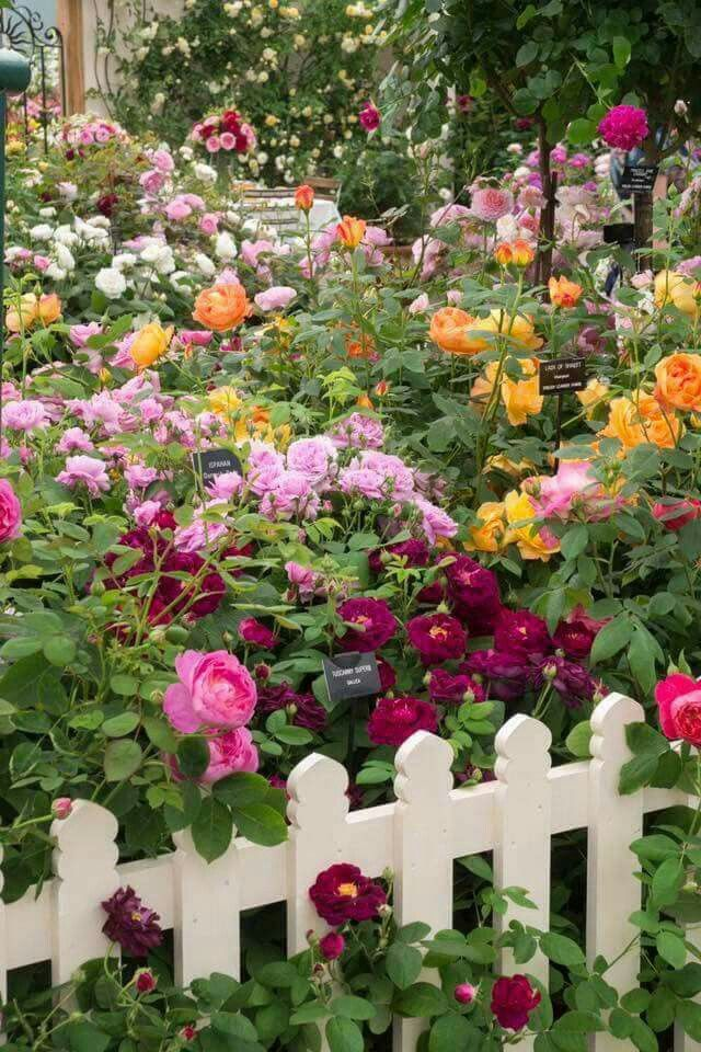 Beautiful Cottage Flower Garden beautiful garden | fierce beauty | pinterest | gardens, flowers