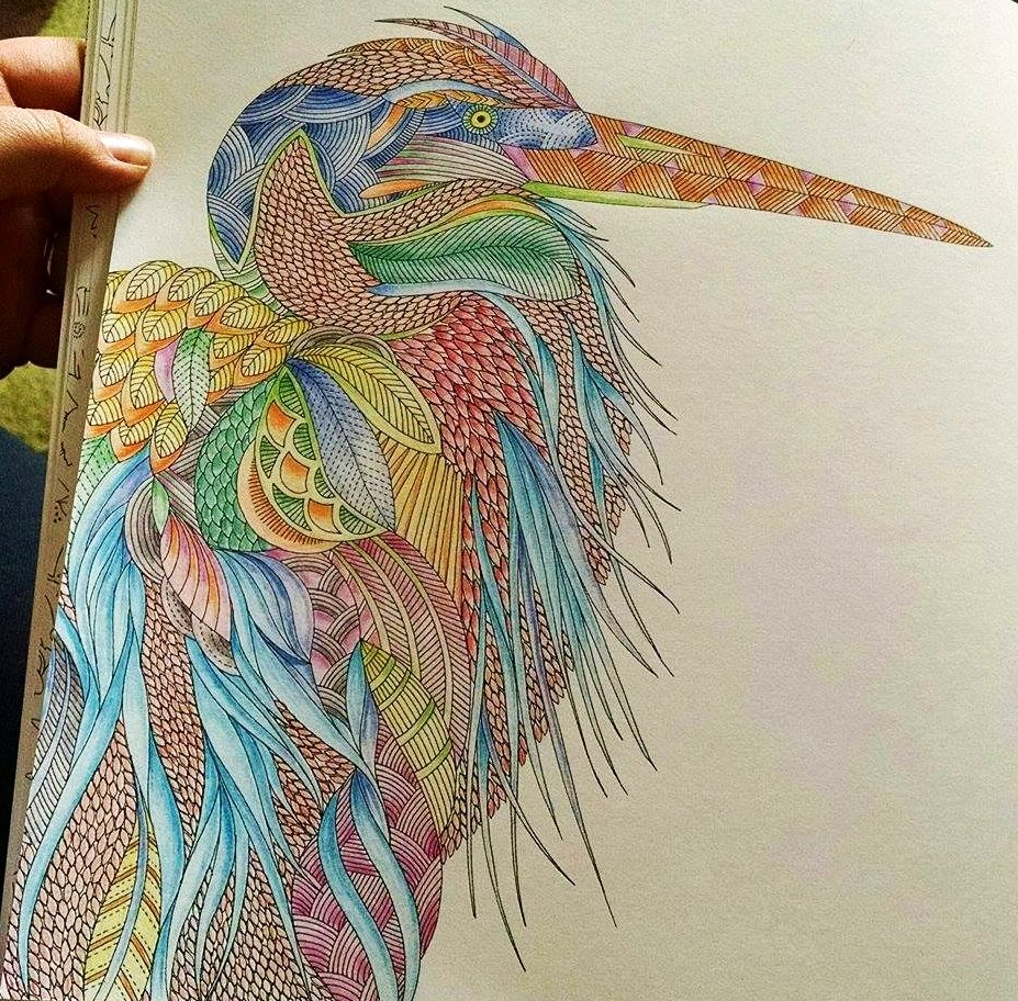 Animal Kingdom Colouring Book Image