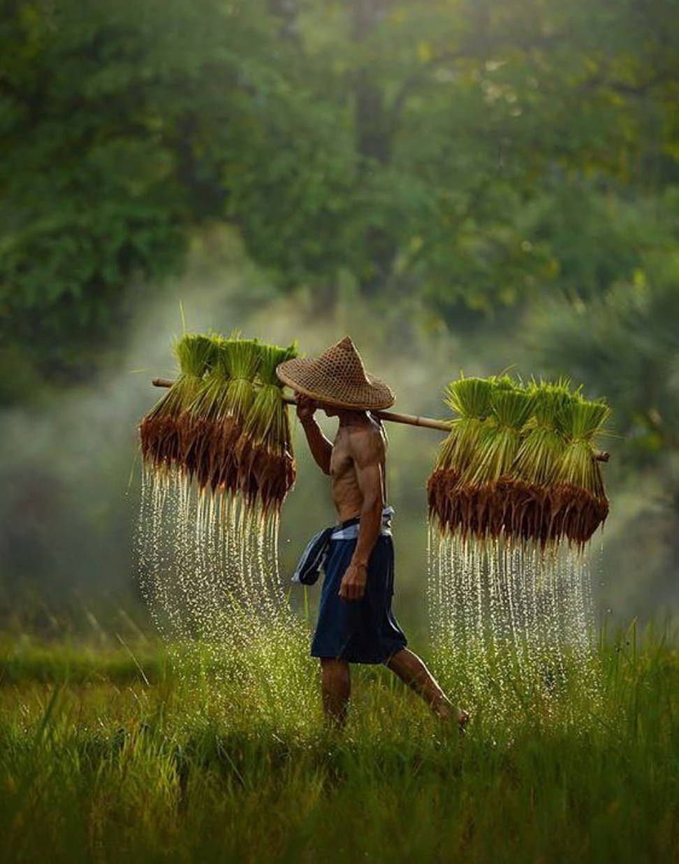 Rice Field Farmer Village Photography Photo People Of The World