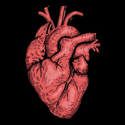Realistic Heart Illustration Ad Ad Affiliate Illustration Heart Realistic Heart Illustration Human Heart Art Realistic Heart Tattoo