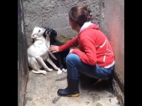 Cães confinados recebem carinho pela primeira vez; veja o vídeo