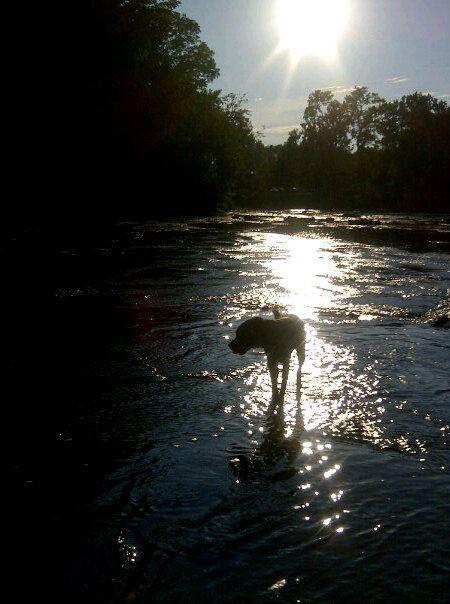 Creek adventure