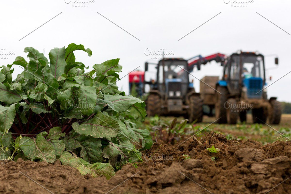Harvesting In 2020 Beets Harvest Technology Photos