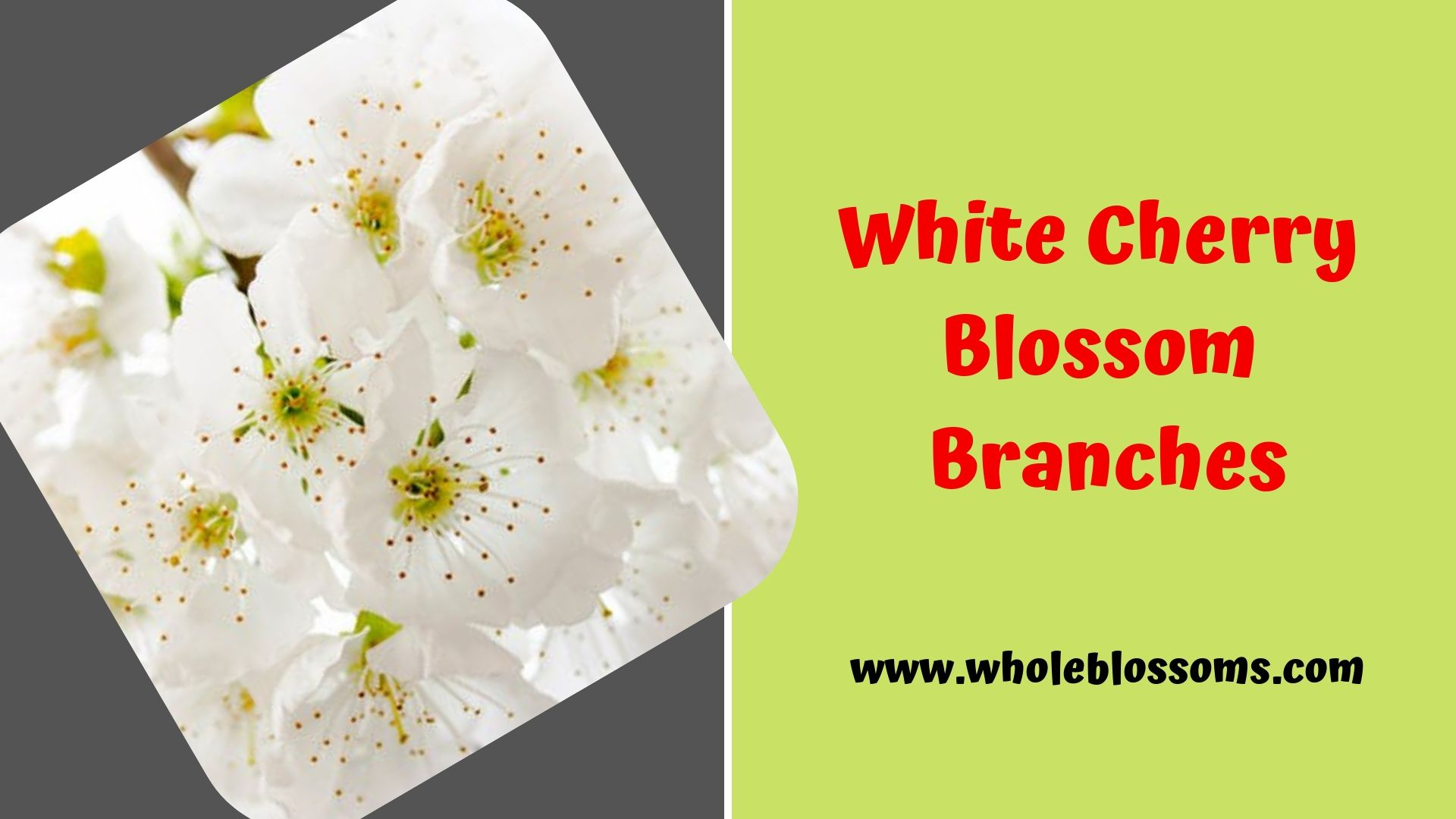 Add White Cherry Blossom Branches In Your Special Day White Cherry Blossom White Cherries Cherry Blossom Branch