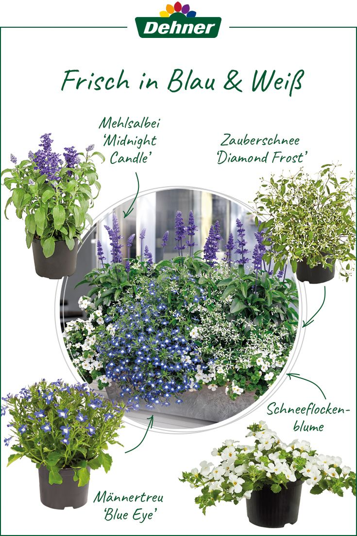Zauberhafte Pflanzenkombination