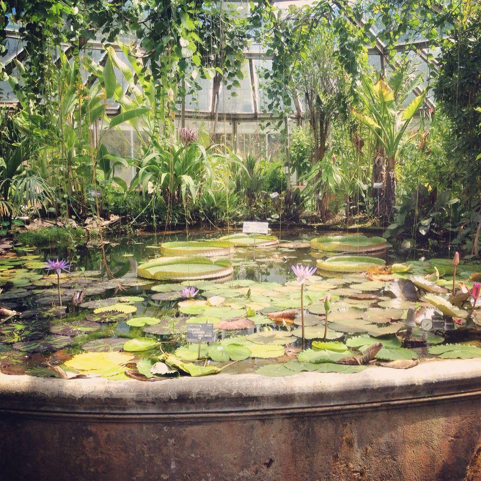 Jardin botanique - Parc de la tête d'or - Lyon | Jardin botanique, Jardins, Botanique