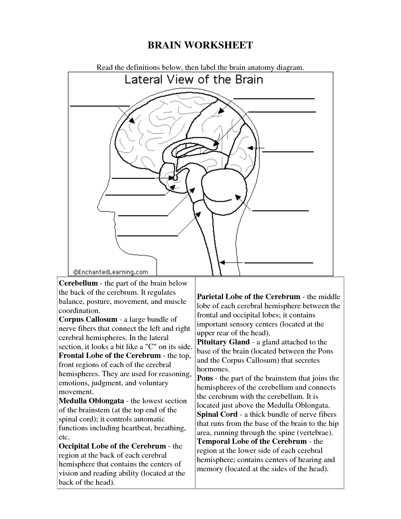 Brain Structures And Functions Diagram Worksheet Volvo 740 Ignition Wiring The Human Worksheets For Kids Science