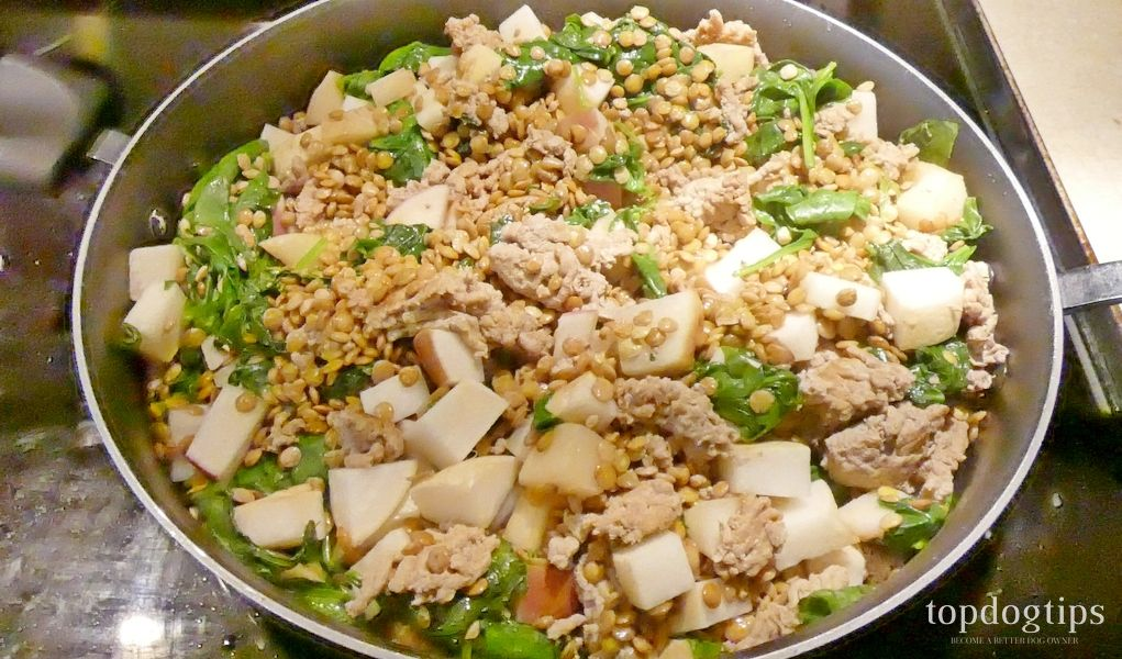 Recipe Turkey Stir Fry Dog Food For Allergies Homemade Dog Food