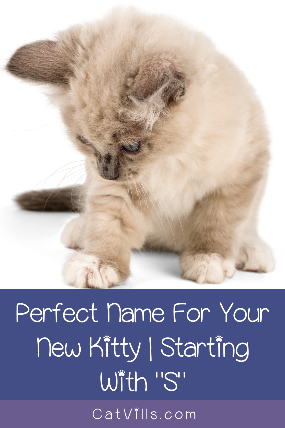 100 Sweet Cat Names Starting with S Cat names, Cats