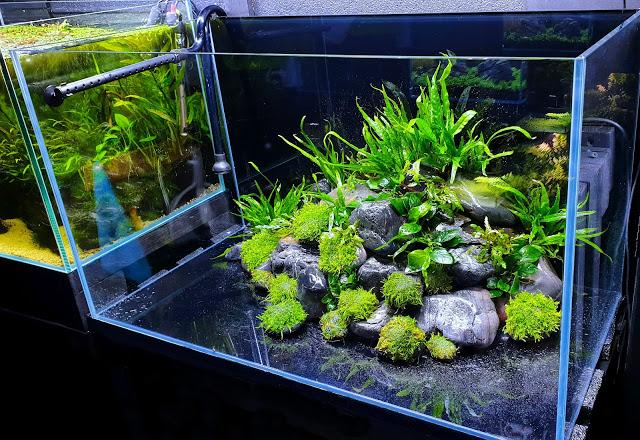 [+] The Fish Tank