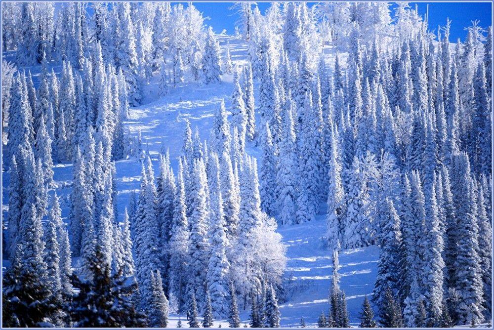 красивые картинки в зимы в хорошем качестве блинный торт
