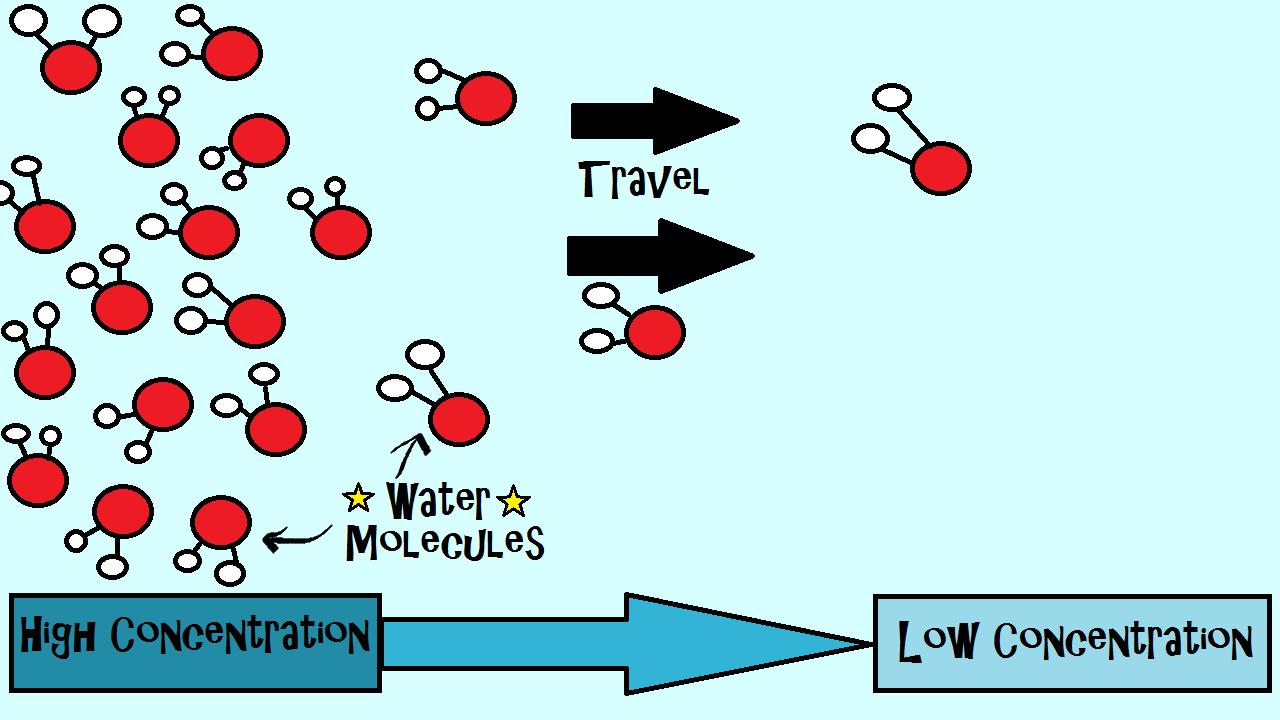 Osmosis is a type of diffusion meaning molecules in this case osmosis is a type of diffusion meaning molecules in this case water travel pooptronica Choice Image