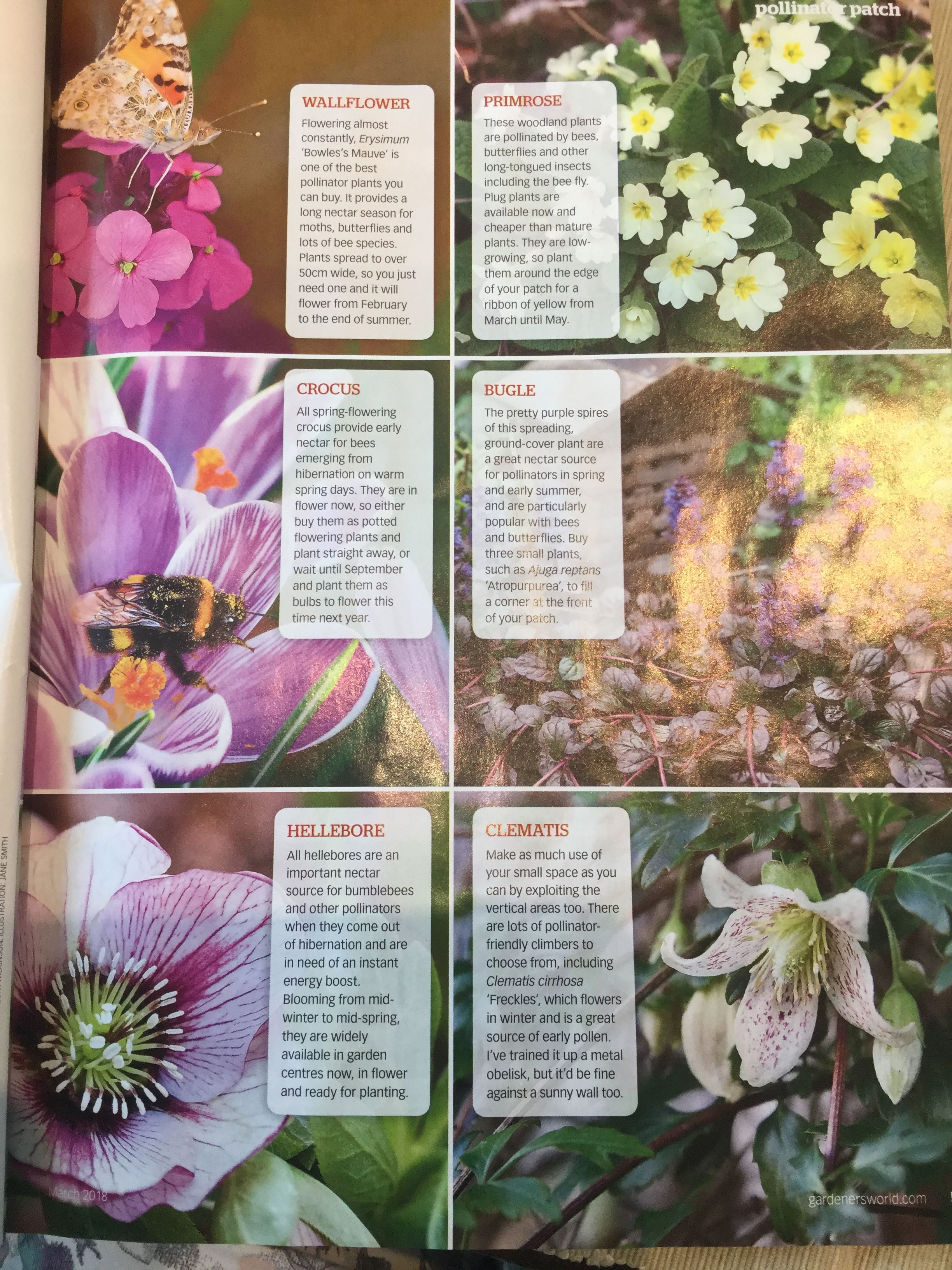 Bbc Gardeners World Bee Friendly Plant Patch Plants For Early