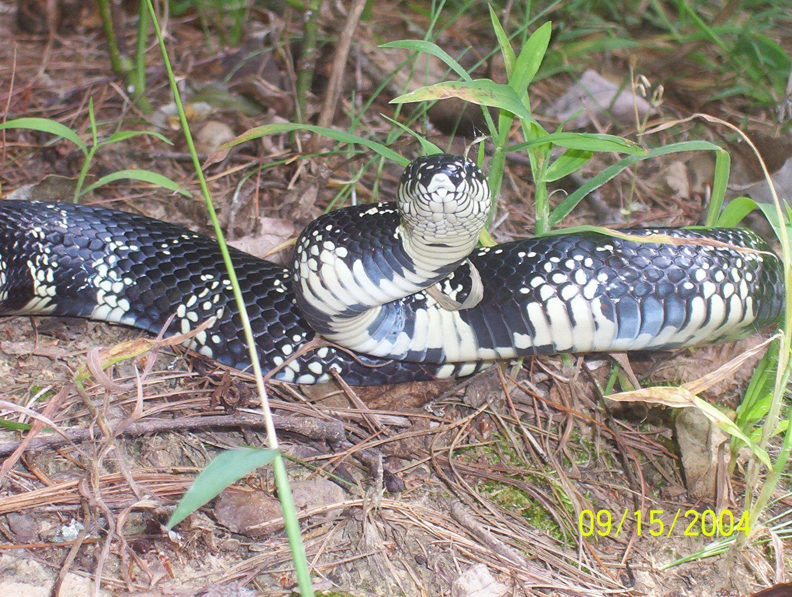 Snakes Of Georgia Snake Aquaponics Kit Black Garden